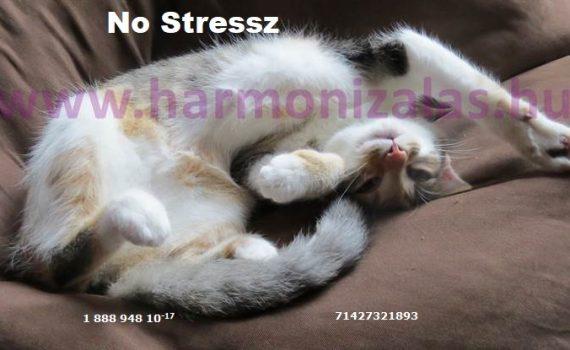 stresszoldó módszerek stresszkezelés feszültségoldás