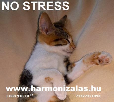 Stressz nélkül könnyebb