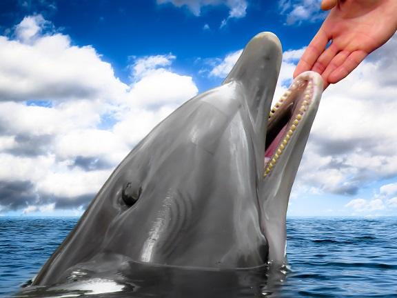 delfines kaland filmajánló és gondolatébresztő